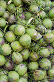 Green coconut at tree Royalty Free Stock Photo