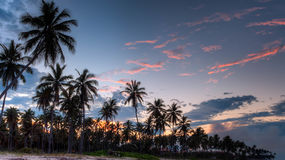 Green Coconut Trees during Daytime Royalty Free Stock Image