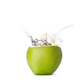 Green coconut with water splash. Over white Royalty Free Stock Photos