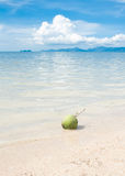 Green coconut on white beach sand Royalty Free Stock Photography