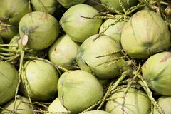 Green coconuts. Freshly harvested green coconuts for sale Royalty Free Stock Photography