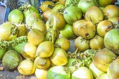 Green coconuts cocos nucifera Royalty Free Stock Image