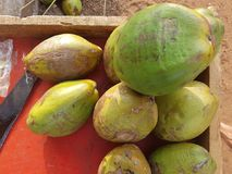 Green coconuts. Lie on the table full of juice Royalty Free Stock Photography
