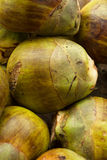 Green coconuts. Indian style. Large green coconuts. Sellers coconuts. Many coconuts. Texture of coconut shell. Drinking coconuts. Picture for interior design or Royalty Free Stock Image