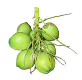 Green coconuts isolate Stock Image