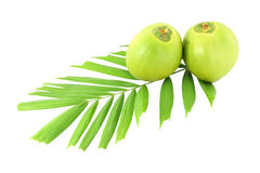 Green coconuts and leaf Royalty Free Stock Image