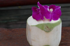 Green coconuts with Orchid Royalty Free Stock Photography