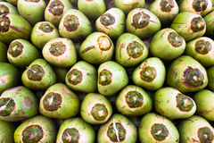 Green coconuts. Coconuts piled up for backgrounds Royalty Free Stock Images
