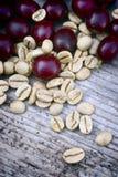 Green coffe (coffea arabica) Stock Photography