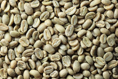 Green coffee bean background Stock Images