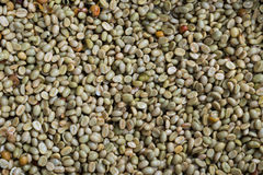 Green coffee bean after pulping hulling and cleaning Stock Photography