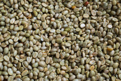 Green coffee bean after pulping hulling and cleaning Royalty Free Stock Photography