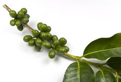 Green coffee beans Royalty Free Stock Photos
