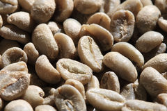 Free Green Coffee Beans Royalty Free Stock Photo - 19096155