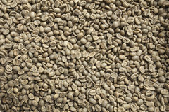 Green coffee beans. Background, background made as coffee beans Stock Image