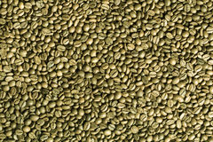 Green coffee beans background. Royalty Free Stock Images
