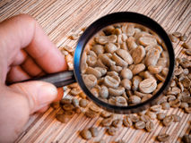 Green coffee beans, close up. Green coffee beans can be seen through a magnifying glass and determine their quality Royalty Free Stock Image