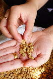 Green coffee beans in hand.  Stock Photography