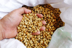 Green coffee beans in hand Stock Photos
