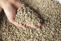 Green coffee beans. On hand Stock Photography