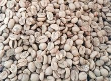 Green coffee beans are unroasted. Coffee wallpaper from Chiang Mai, Thailand Royalty Free Stock Photo