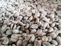 Green coffee beans are unroasted. Coffee wallpaper from Chiang Mai, Thailand Stock Images