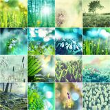 Green collage Stock Photography
