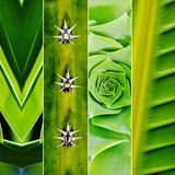 Green Collage Royalty Free Stock Photos