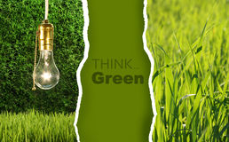 Green collection of eco-friendly photos Royalty Free Stock Photo