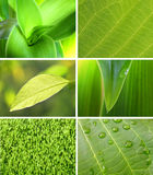 Green collection of leaf Royalty Free Stock Photography