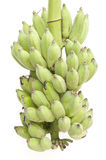 Green color banana fruit Stock Photography