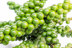 Green color black pepper Stock Photos