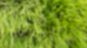 Green color blurry Stock Image
