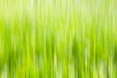 Green color blurry Royalty Free Stock Images