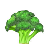 Green color broccoli. Illustration of green color broccoli on bright background Stock Photos