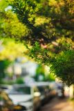 Green color in the city, blured background. Royalty Free Stock Image