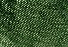 Green color cloth texture with pattern Royalty Free Stock Photos