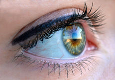 Green Color Eye. Human green color eye, macro photography royalty free stock image