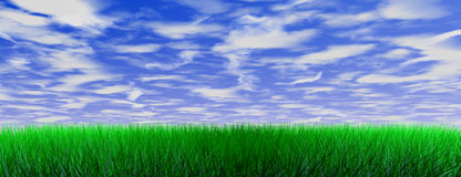 Green color grass Royalty Free Stock Photo