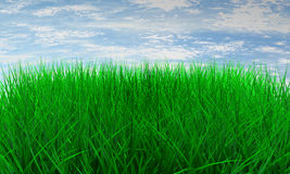 Green color grass Royalty Free Stock Photos