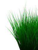Green color grass isolated on white Stock Images