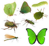 Green color insects collection isolated on white Royalty Free Stock Images