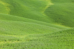 Green color meadow field waves abstract background Royalty Free Stock Photos
