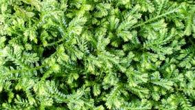 Green Stock Photos