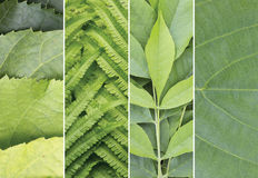 Green color samples collage. Summer background. stock photography