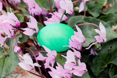 Green colored Easter egg Stock Photo