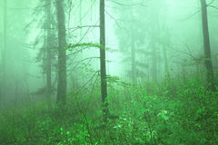Green colored forest landscape Royalty Free Stock Photography