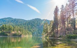 Green colored lake surrounded by pine forest with bright sunshine and blue sky Stock Photos