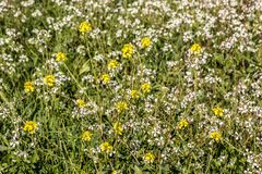 Green and colorful flower field with yellow and white flowers royalty free stock image