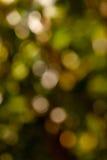 Green colors bokeh Stock Photos